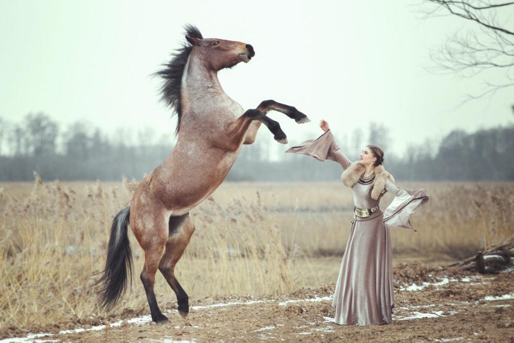 Sesja z koniem, warsztaty fotografii koni