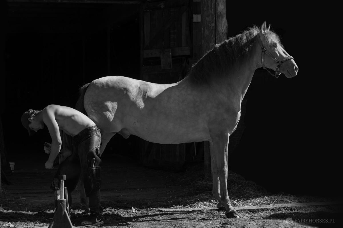 Fotografia koni, zdjęcia koni