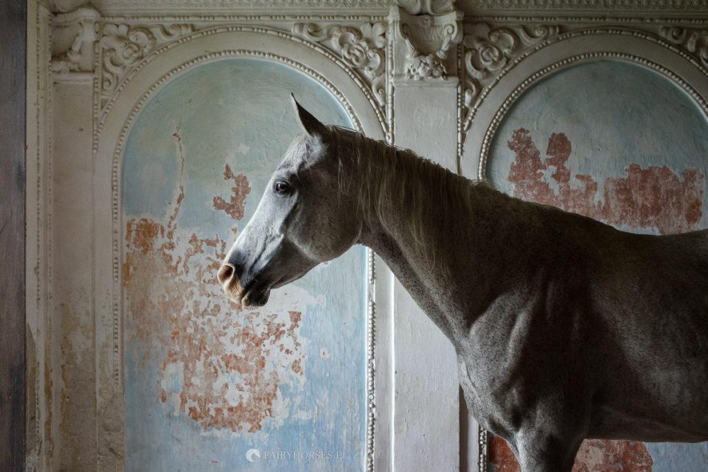 Fotografia koni, sesja z koniem