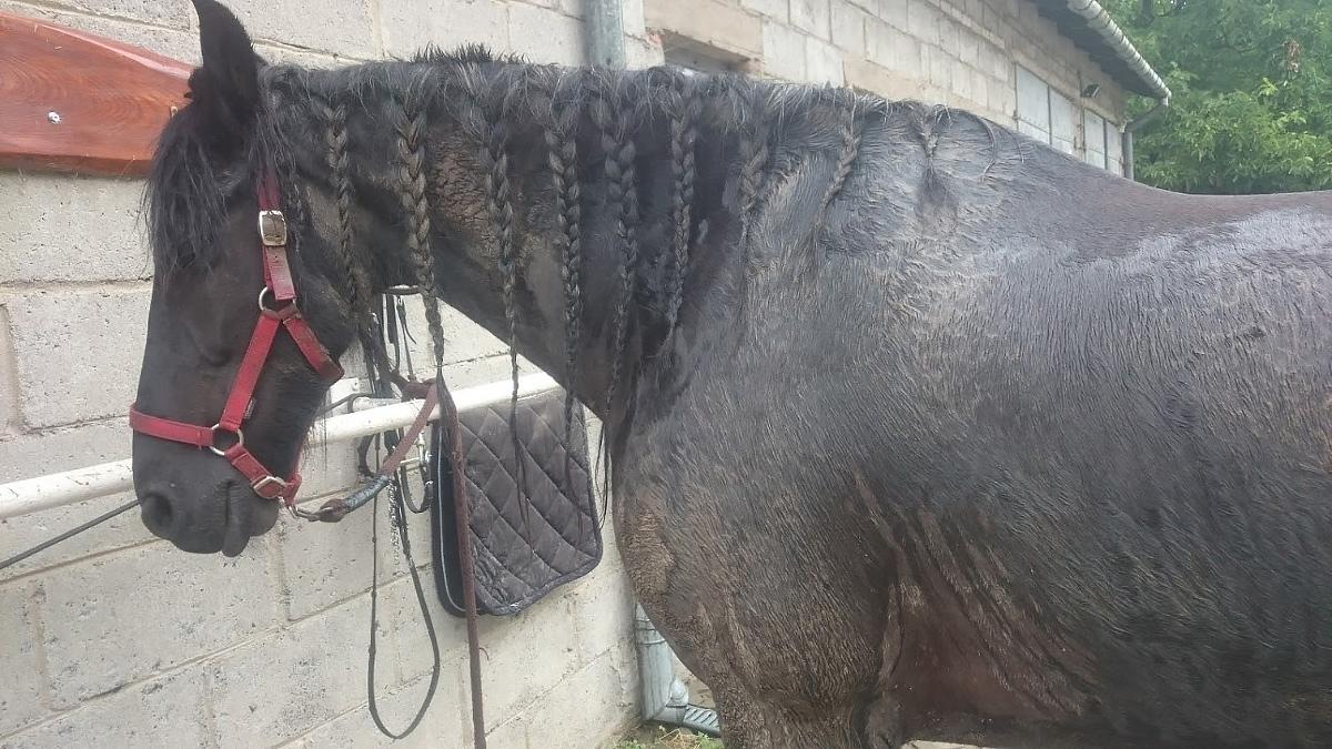 Jak przygotować konia do sesji fotograficznej