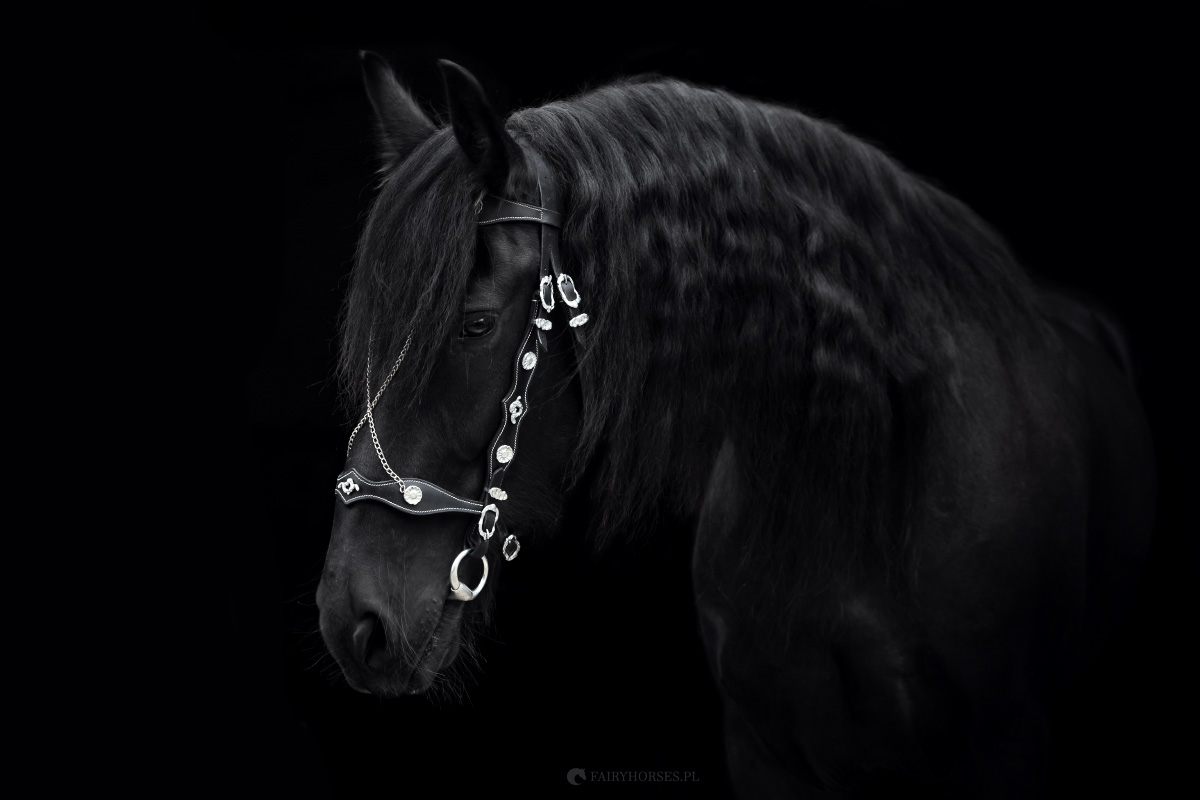 6514ef5654211 Barokowe i ozdobne ogłowia dla koni, prezenterki i haltery