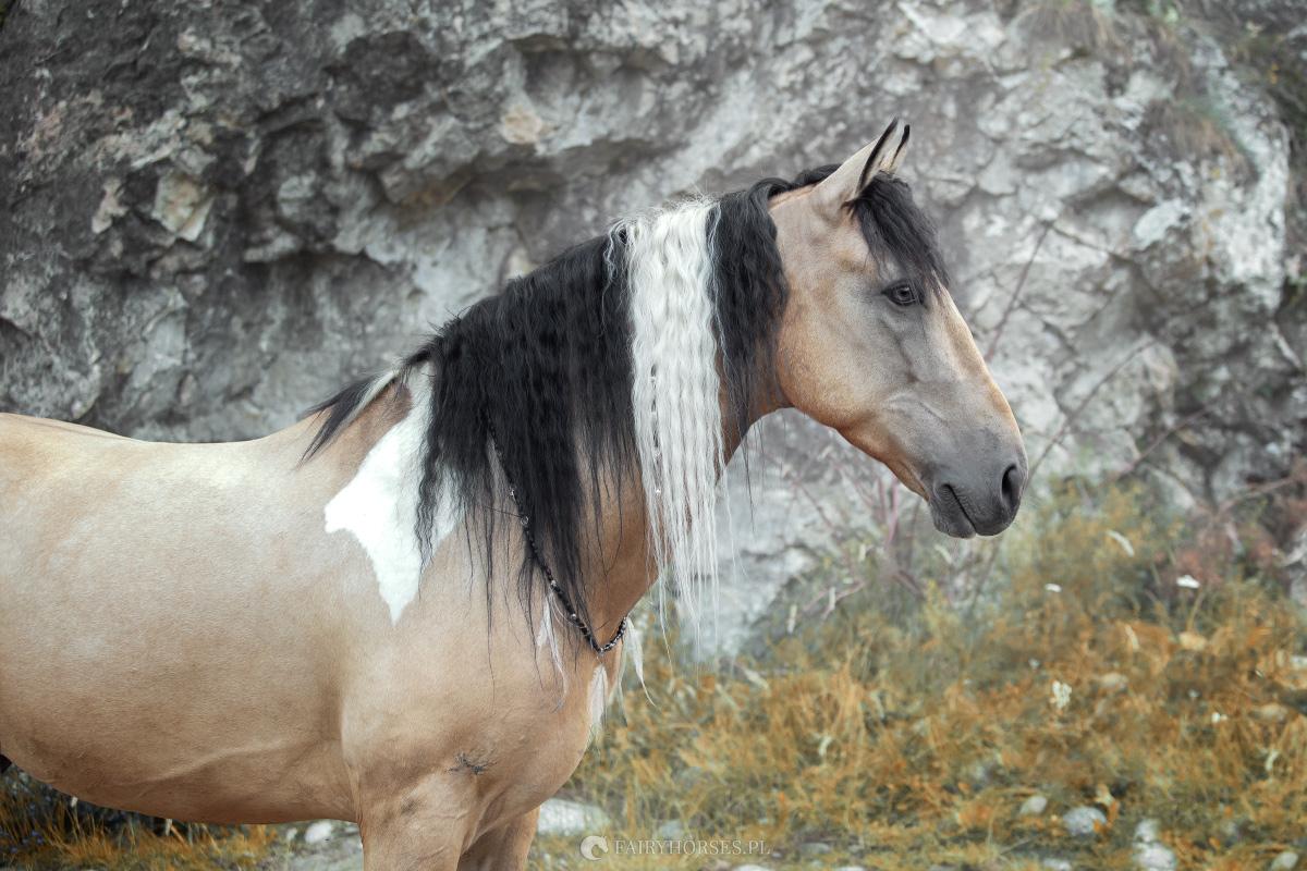 Fairy Horses - Stylizowane sesje zdjęciowe z końmi