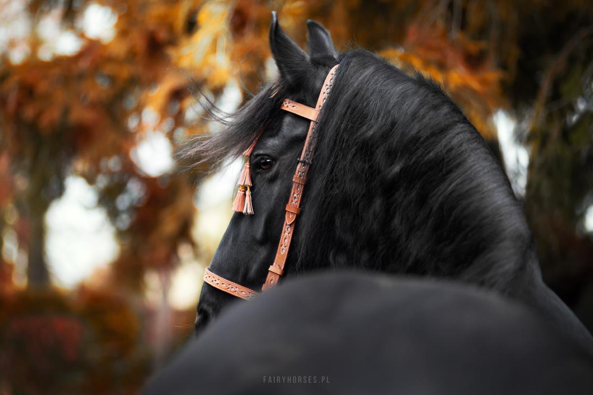 Nagradzanie koni jedzeniem