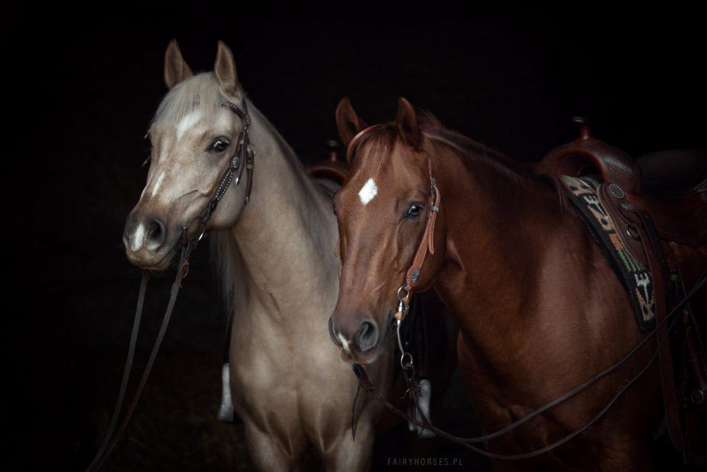 Fotografia koni, zdjęcia koni.