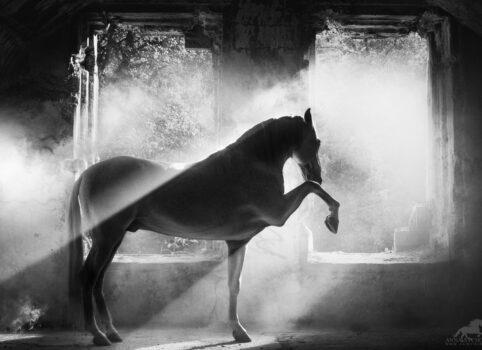 Sonante PRE – sesja konia w ruinach