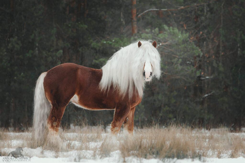 Baśniowa sesja z koniem, fotografia koni, zdjęcia koni