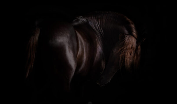 Alazano – koń andaluzyjski
