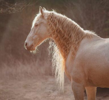 SAVIO – sesja konia