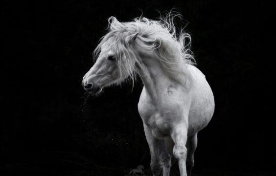 Konie do wynajęcia na sesje